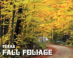 Fall Foliage in the East Texas Piney Woods