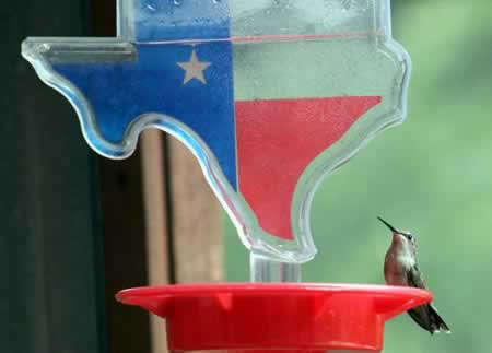 Ruby-throated hummingbird in Tyler on our Texas-shaped feeder!