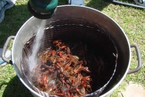 Filling up the crawfish pot with water ... let's get the boil underway