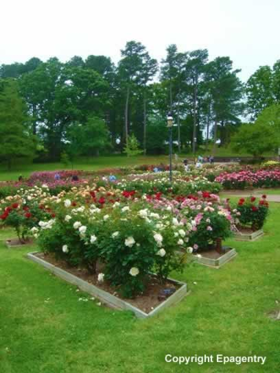Grounds of the Municipal Rose Garden, looking south, Tyler, Texas