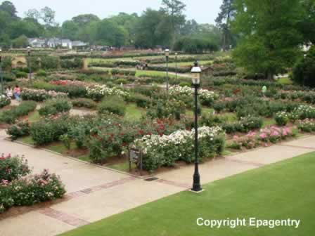 Overview of the Tyler Texas Rose Gardens