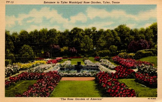 Historic postcard: Entrance to the Tyler Municipal Rose Garden, Tyler, Texas