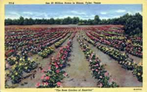 "Historic postcard ... ""See 20 million roses in bloom, Tyler Texas, The Rose Garden of America"