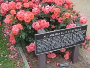 All-America Rose Selections at the Municipal Rose Garden, Tyler, Texas